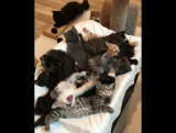 tableful of kitties yawning and stretching their paws