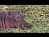 «Самые опасные животные: Челюсти и грехи. 7 смертных грехов» (Познавательный, природа, 2013)