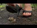 Crush snail Aliona sandals in park