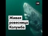 Самая старая акула в мире