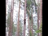 Вот почему не стоит прятаться от медведя на дереве)