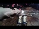 кот алкоголик -горе в семье