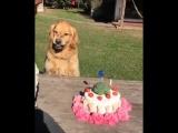 Не трогай мой торт!!!