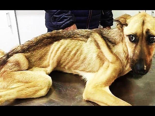 Добрый человек помогает выжить обречённым животным!