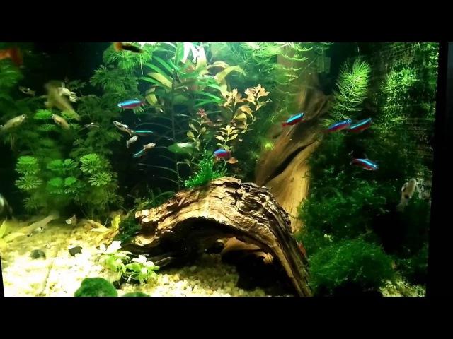 Запуск нано аквариума. Кристально чистая вода в аквариуме просто но очень эффек ...