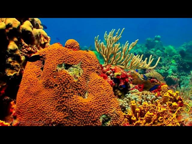 432 Гц расслабляет видео HD умиротворяет коралловый риф 432 Hz relax Soft music to relieve stress