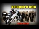 Мотоцикл против слона Разбор полётов №12