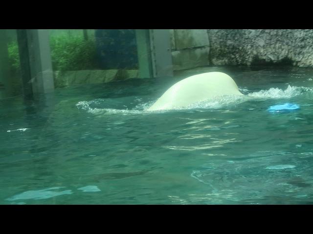 8 Sep 2017 Pororo at Tokushima zoo, Tokushima, Japan