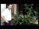 Cuộc sống người Ninh Bình - thăm vườn lan rừng tuyệt đẹp của bác Lượng Ninh Phong