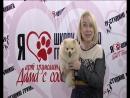 Салон Дама с собачкой. Мы на Ветта г. Пермь.