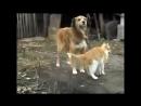 Самые смешные приколы про котов и собак. Неразлучные друзья коты и собаки!