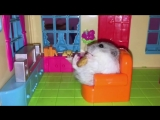Hamsters Gone Wild