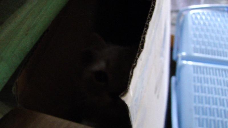 Бастиан залез в коробку 1
