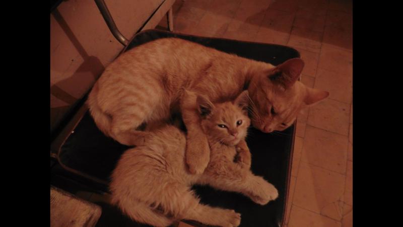СВОДНЫЕ БРАТЬЯ кошаки Рыжик и Малыш спят в женск раздевалке 2 го ц