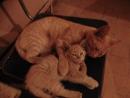 СВОДНЫЕ БРАТЬЯ ( кошаки (Рыжик и Малыш) спят в женск. раздевалке 2-го ц.