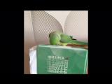 Что не так с моим попугаем?