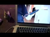 Попугаю не понравилось видео, и он вырвал клавишу