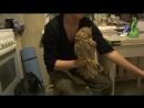 Ушастая сова Эпитафия 71 - 2017 (44)