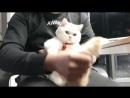 Не позволяйте своему мужчине ласкать кошку. Потому что это станет мастурбирующим ходом.