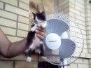 Помощь животным БУДЕННОВСК фото #5