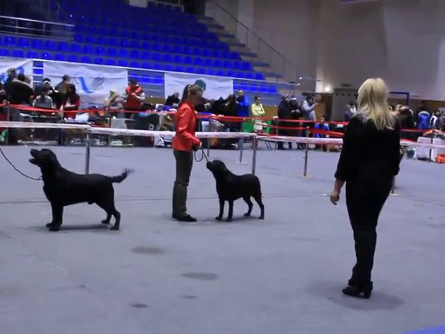 Stuart ex 1, CAC, Best Male, Best of Breed black color mono 31 01 2016 online video cutter com