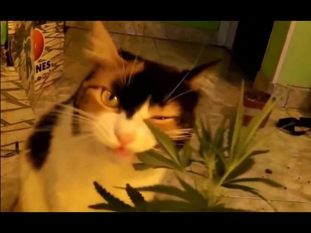 When a cat eats marijuana   shooting stars