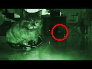 Драчев могут ли видеть коты духов серьги, колье
