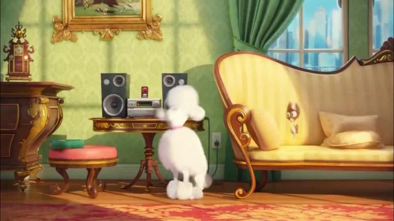 Rocking Poodle Tайна жизни домашних животных