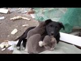 Больно видеть такое 😢 Друзья, не бросайте животных...Распространите это видео!