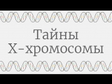 Тайны X-хромосомы [TED-Ed]