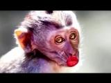 Деньги и обезьяны. Как же мы похожи...