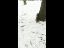 Прогулка в парке им Кирова