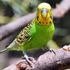 Купить и продать попугая