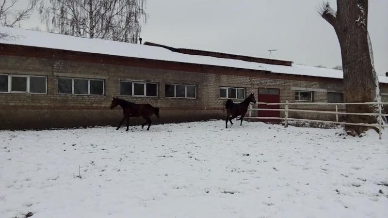 Первый снег деффчонки весятся