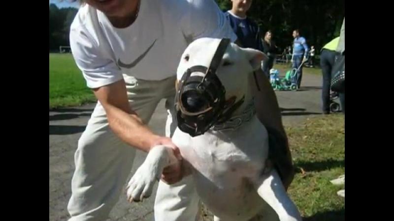 Черняховск- Выставка собак в нашем городе-fclip-scscscrp