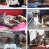 """В дар кошки и котята """"Кошкин роддом"""" Москва"""