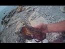 Черное море. Крабы, скаты, медузы,рапаны. The black sea. Crabs, stingrays, jellyfish,brine