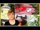 ПОСАДИТЕ таблетки АСПИРИНА в саду! Эффект - ошеломиссимо