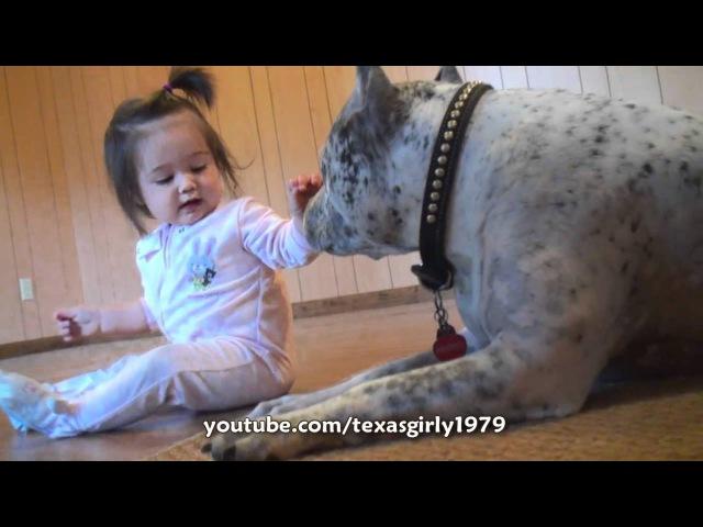 Pit Bull Sharky ATTACKS Baby Girl with KiSSES PitBull DOG vs BABY.HelensPets.com