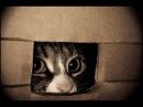 Затаившийся тигр Смешные кошки прячутся