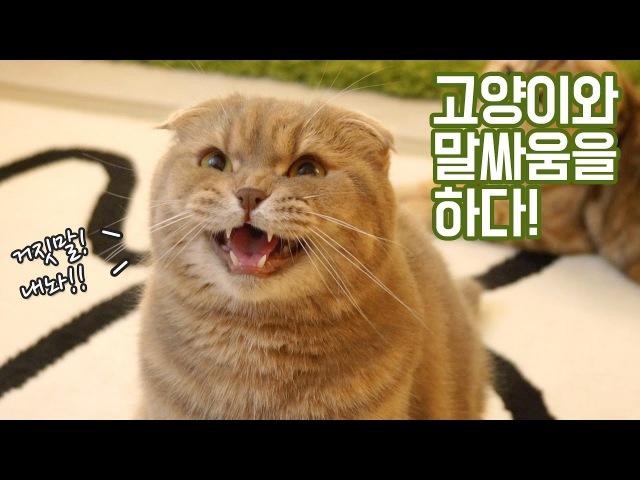고양이 이즈와 말싸움하다!
