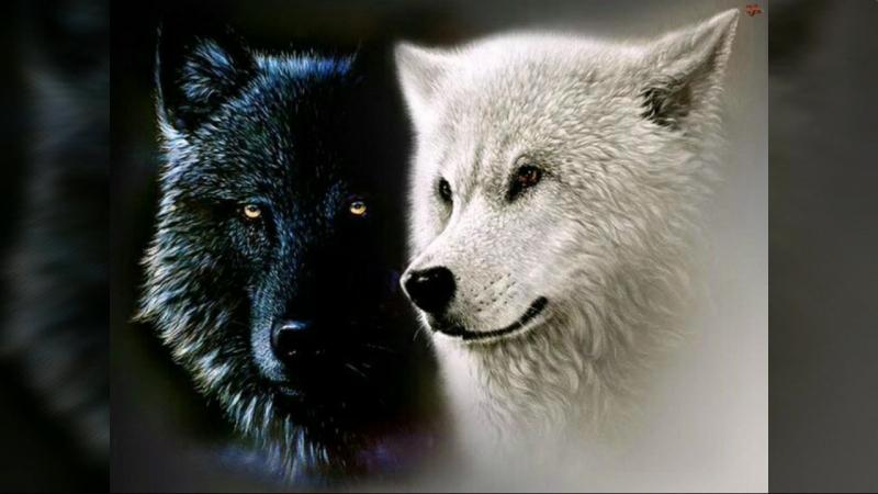 душа волчицы mp4