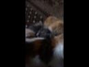 Ася и первые котята