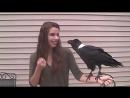 Ravens can talk