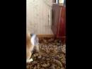 кот борец