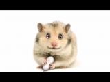 Evil hamster  Злобный хомяк  3D-персонаж
