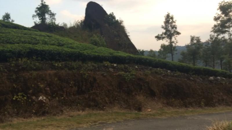 Плантации чая в Муннаре. ЯИндия