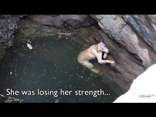 Пес упал в глубокий колодец и держался на плаву из последних сил (трогательное душевное видео)