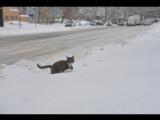 Снегопад в Москве может оказаться самым мощным за 70 лет