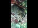 Мой любимый пёсик Ярик поздравляет все со Сарым Новым Годом Собаки